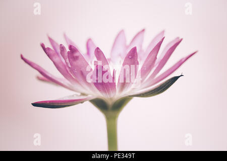 The appearance of a purple lotus flower is a beautiful symbol of the appearance of a purple lotus flower is a beautiful symbol of buddhism stock mightylinksfo