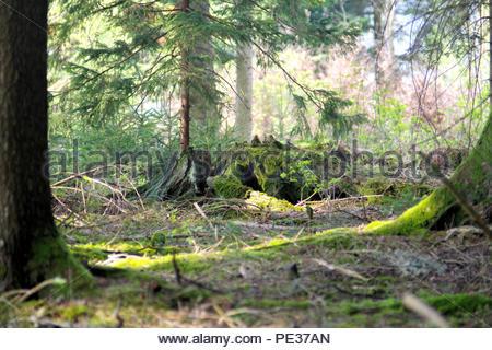 Landschaftsbild mit Wälder, lichtungen,stilleben - Stock Photo