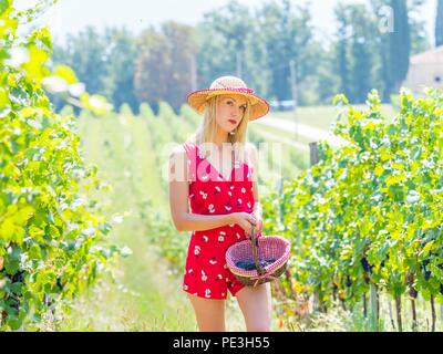 Young woman in vineyard carrying holding small basket with grapes in hand looking at camera walk walking eyeshot eyes-eye contact aka maiden girl - Stock Photo