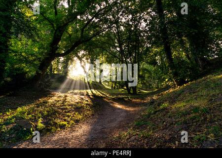 Parklandschaft mit Bäumen lädt zum Wandern ein. - Stock Photo