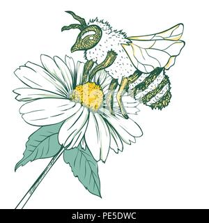 Entomology Sketch Illustration with Bee or Wasp and Camomile Flower. Blossoming and Pollination. Botanical or Medical Theme. Isolated on White Background - Stock Photo