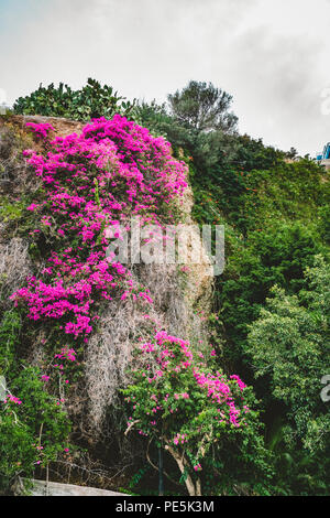 Photo of bougainvillea flower in picturesque island of Greece with mountains and sky and clouds in the background. . Photo taken in Greece. - Stock Photo