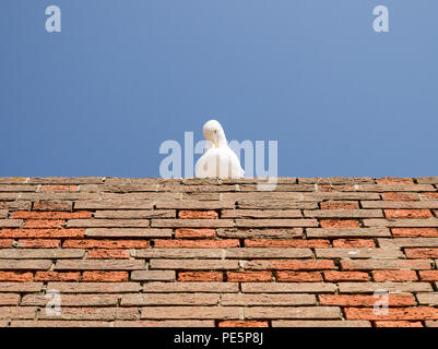 Colour image of a white seagull on a red brick wall, with its head tucked into its chest, shot from below against a clear blue sky - Stock Photo