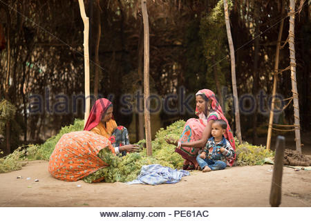 SARUPGANJ, RAJASTHAN INDIA, JAN 09, 2017 : An unidentified women worker sort Fennel seed for packaging at a wholesale vegetable market in Sarupganj, R - Stock Photo