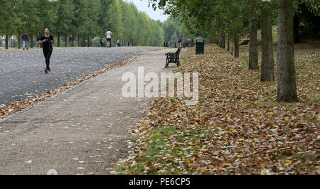Finsbury Park. London. UK 13 Aug 2018 - UK Weather: Autumn feel in Finsbury Park in North London as it is covered in dry fallen leaves, in August.   Credit: Dinendra Haria/Alamy Live News - Stock Photo