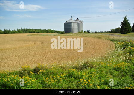 Golden cereal field with silos and blue sky in background, rural Prince Edward Island, Canada - Stock Photo