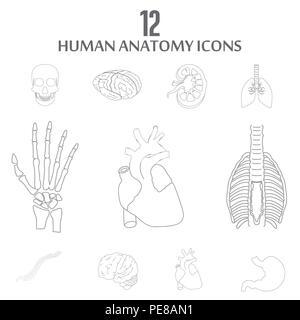 Human Anatomy icons set vector - Stock Photo