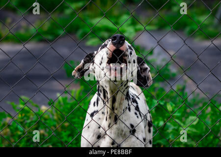 dog behind the fence in the cage looks at will, the protection of animals. - Stock Photo
