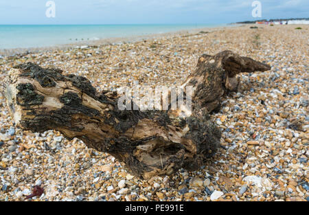 Large piece of driftwood washed up on a shingle beach in the UK. - Stock Photo
