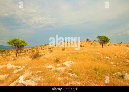 Dry landscape with pine trees in Dalmatia, Croatia - Stock Photo