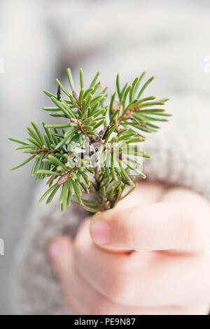 The child is holding a spruce twig in his hand. Winter. - Stock Photo