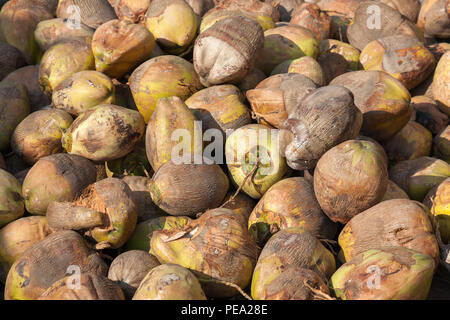 Pile of coconuts at a market in Togo, Africa - Stock Photo