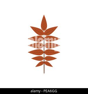 Dry Brown Autumn Leaves Vector Illustration Symbol Graphic Logo Design Template - Stock Photo