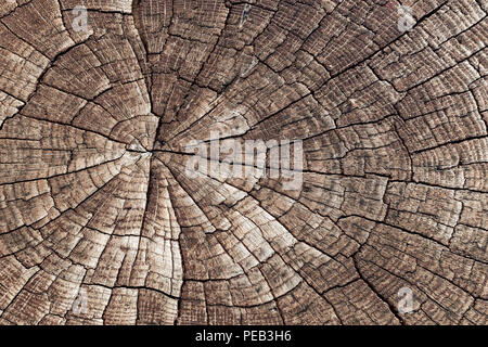 Wooden texture background. Close-up old cracked aged tree cut log. Detail woodentree trunk - Stock Photo