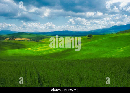 Rolling Hills of the Tuscan Countryside, Val d'Orcia, Tuscany, Italy - Stock Photo
