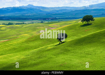 Verdant Knolls of the Tuscan Countryside, Val d'Orcia, Tuscany, Italy - Stock Photo