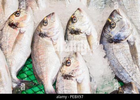 Fish sale in market. Sea bream fish on ice. - Stock Photo