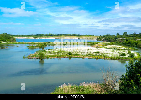 White spring flowers in College Lake in Tring, Buckinghamshire - Stock Photo