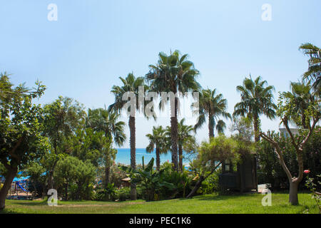 Mediterranean landscape. A green lawn with palm trees in the hotel. - Stock Photo