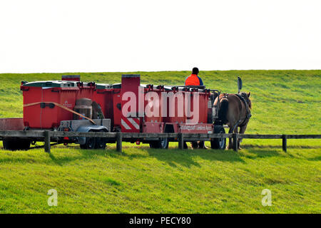 Team of Horses, rubbish collection, Juist, National Park Wadden Sea, Lower Saxony, East Frisian Island, Germany - Stock Photo