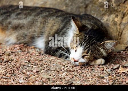 Cat sleeps on the ground - Stock Photo