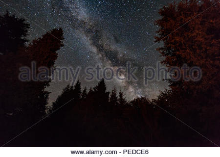 Night forest under the starry sky. Fairy-tale landscape. - Stock Photo