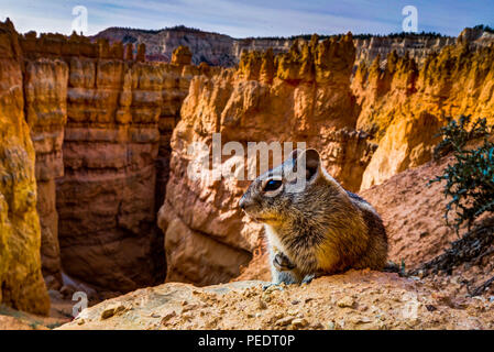 Photo taken at Bryce Canyon in Utah United States of America. - Stock Photo