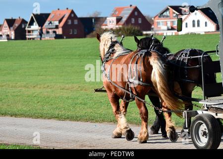Team of Horses, Juist, National Park Wadden Sea, Lower Saxony, East Frisian Island, Germany - Stock Photo