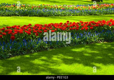 Tulips at Keukenhof Holland - Stock Photo