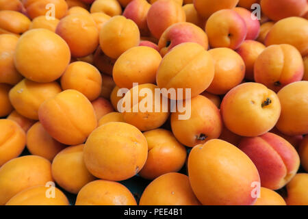 Close up of fresh Apricots, fresh fruit, healthy orange apricot. - Stock Photo