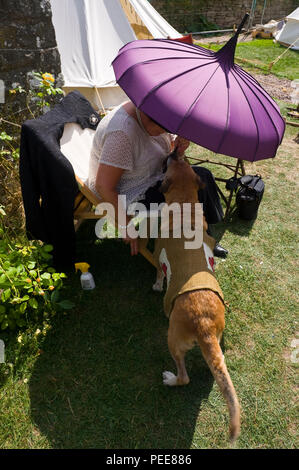 World War One commemorative event first aid dog trying to keep cool in the shade of a parasol at Hay-on-Wye Powys Wales UK - Stock Photo