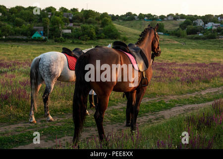 Two horses outdoor in summer happy sunset together nature - Stock Photo