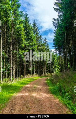 Forest track through forest in summer - Stock Photo