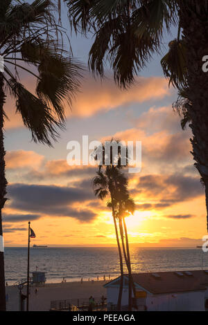Palm trees and Pier on Manhattan Beach at sunset in California, Los Angeles, USA. - Stock Photo
