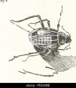 Image taken from page 265 of 'Nilfahrt. Mit ... Illustrationen ... von R. Mainella' Stock Photo