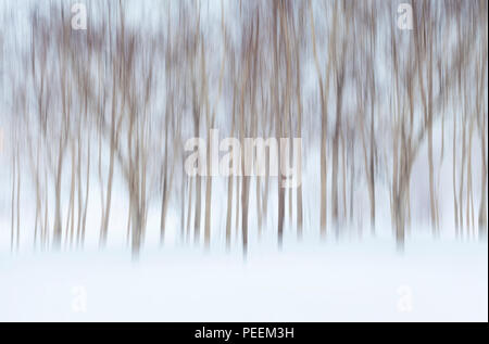 Abstract Wintry Background with Motion Blurred Birch Trees and Snow - Stock Photo