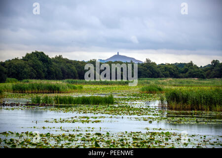 Reeded pools and lakes at Avalon Marshes. This large area of marshland is rich in bird and wildlife including deer, otters, herons, egrets, hawks, owl - Stock Photo