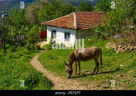 Fishing donkey in front of small house, Pellumbas, Pëllumbas, Qark Tirana, Albania - Stock Photo