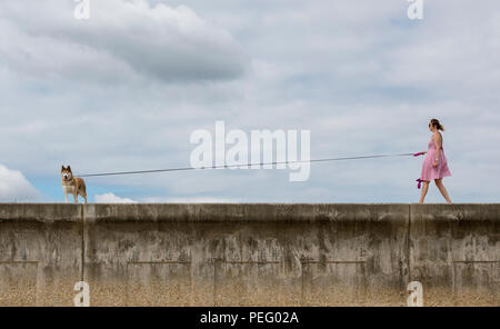 a young woman walking a dog along a sea wall in the summer on a long lead. - Stock Photo