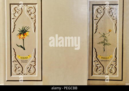 Illustrative-didactical botanical image -korona and amarillo plants- on the walll of the central nave of the Jesuit-founded Saint Joseph the Worker Ca - Stock Photo