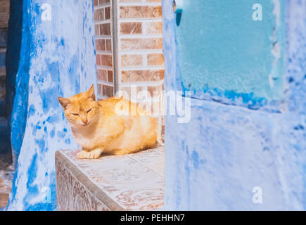 Beautiful stray cat sleeps on the streets of Morocco - Stock Photo