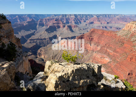 AZ00269-00...ARIZONA - View of the Colorado River Canyon from the canyon rim trail near Monument Creek Vista,  located along the Hermit Road in Grand  - Stock Photo