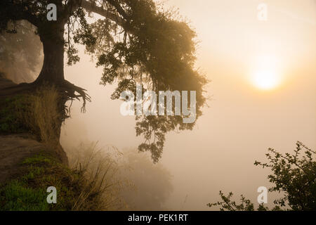The sun rises through thick autumn fog hanging along the bluffs of the American River in Fair Oaks, California. - Stock Photo