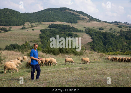 Shepherd guiding his flock of sheep along the countryside fields of Kardzhali Province, Bulgaria - Stock Photo