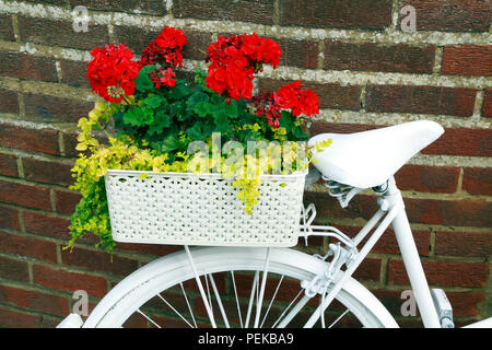 Hunstanton in Bloom, unusual plant container, white painted bicycle, bedding plants - Stock Photo