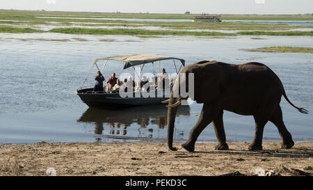 Eco tourists on safari in Africa on a boat in Chobe park, Botswana. - Stock Photo