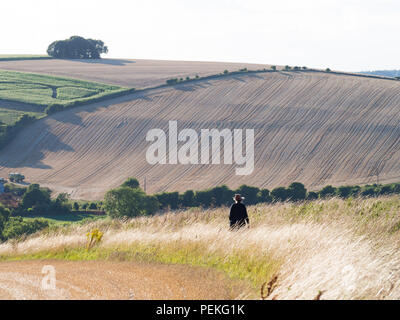 Waking in the English countryside on a late summer evening - Stock Photo