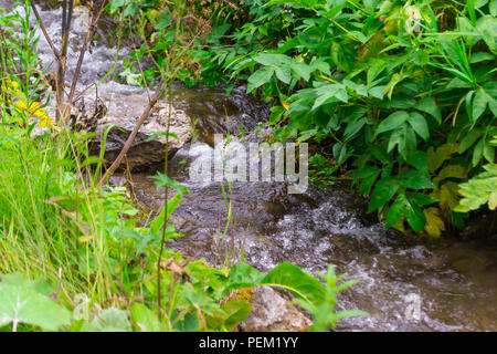 A small waterfall between the stones among the green grass from a creek with clear mountain water in the mountains of the Altai - Stock Photo