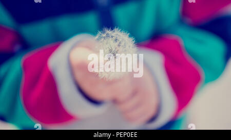 Close up of a young child holding a fragile dandelion clock with feathery seeds, toned retro effect. - Stock Photo