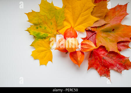 Frame of autumn yellow, orange and red maple leaves, Physalis isolated on white background, top view, flat layout. Creative pattern, autumn background. Branches of Chinese Lantern on a white background. - Stock Photo